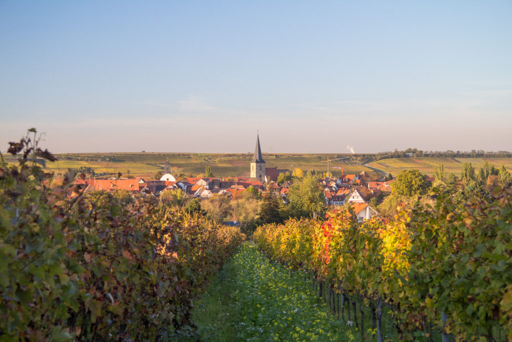 Blick auf Freinsheim