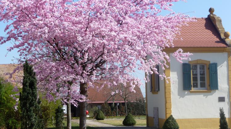 Freinsheim Barockgarten Gartenhaus Franz Lind